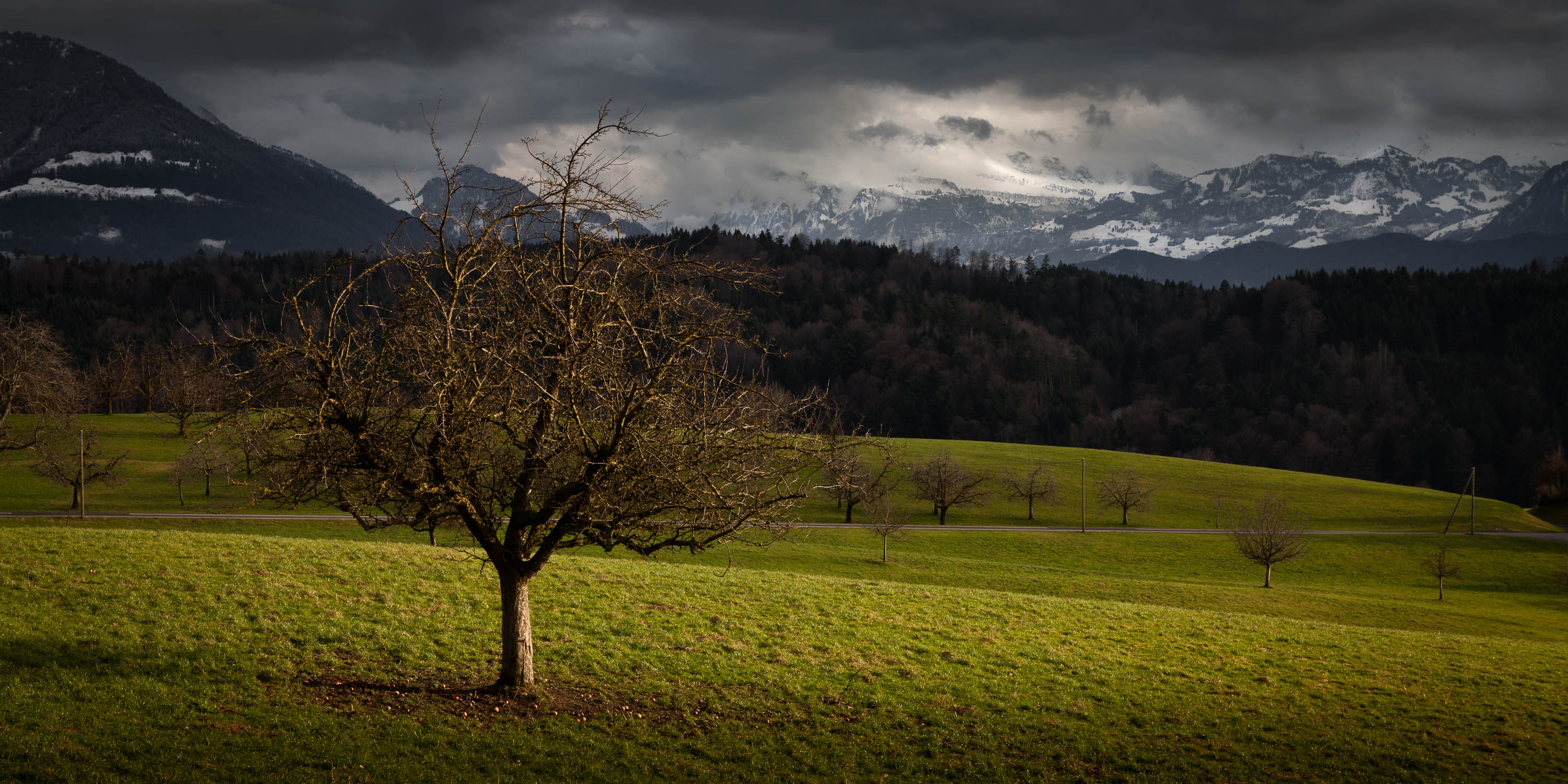 Swiss apple tree view